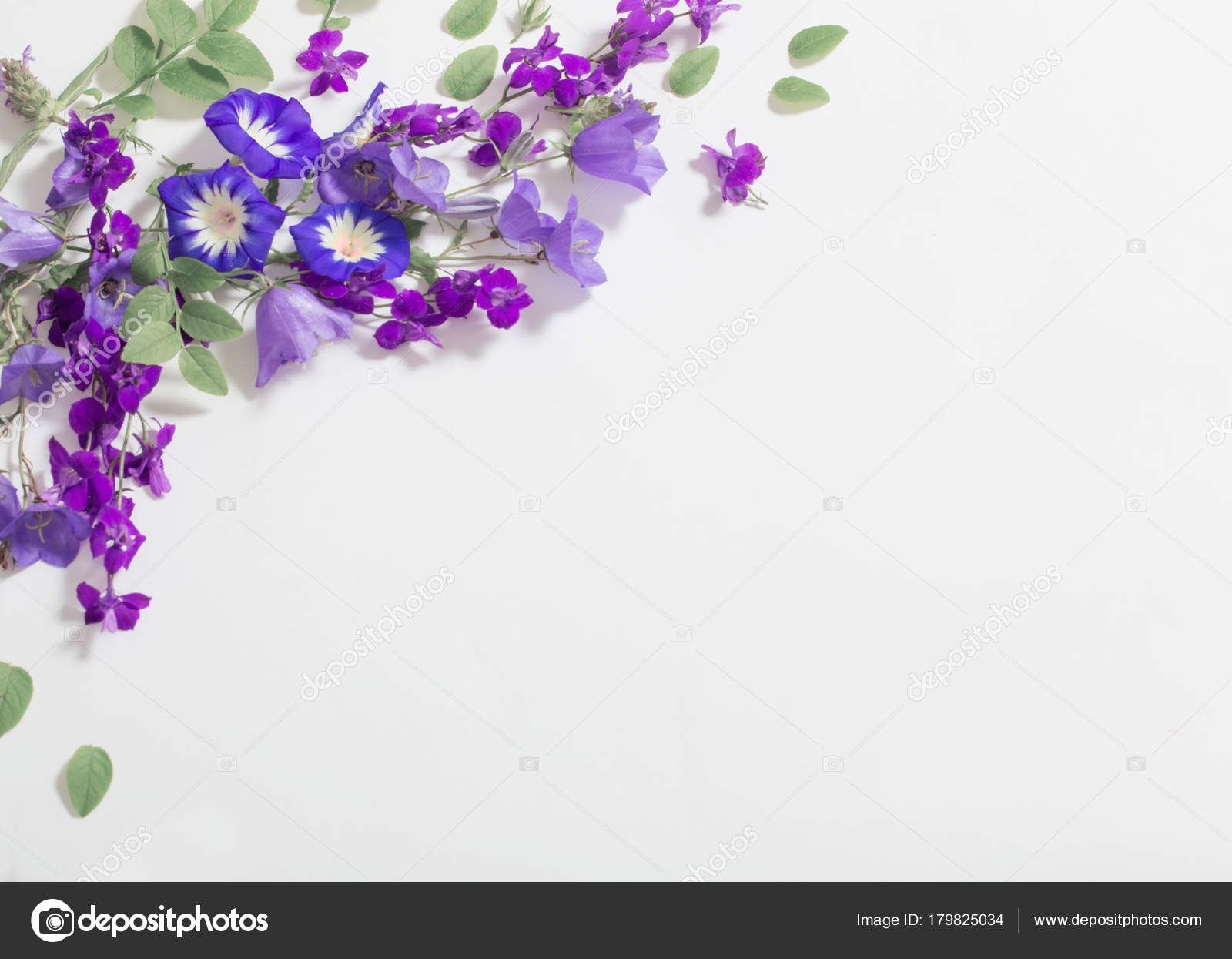 Blue Summer Flowers On White Background Stock Photo Kruchenkova