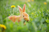 Photo red bunny in grass