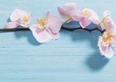 orchidea kék fa háttér
