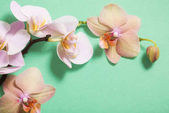 orchids on green background