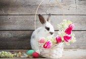 Fényképek nyúl a húsvéti tojás fa háttér