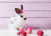 Fényképek húsvéti nyuszi és tojás