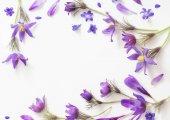 Fotografie Frühlingsblumen Sie violette auf weißem Hintergrund