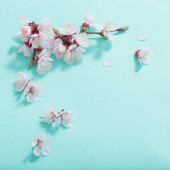 Photo pink cherry flowers on green background
