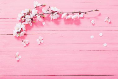 Pink cherry flowers on pink wooden background stock vector
