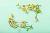 větve kvetoucí vrby na zeleném pozadí