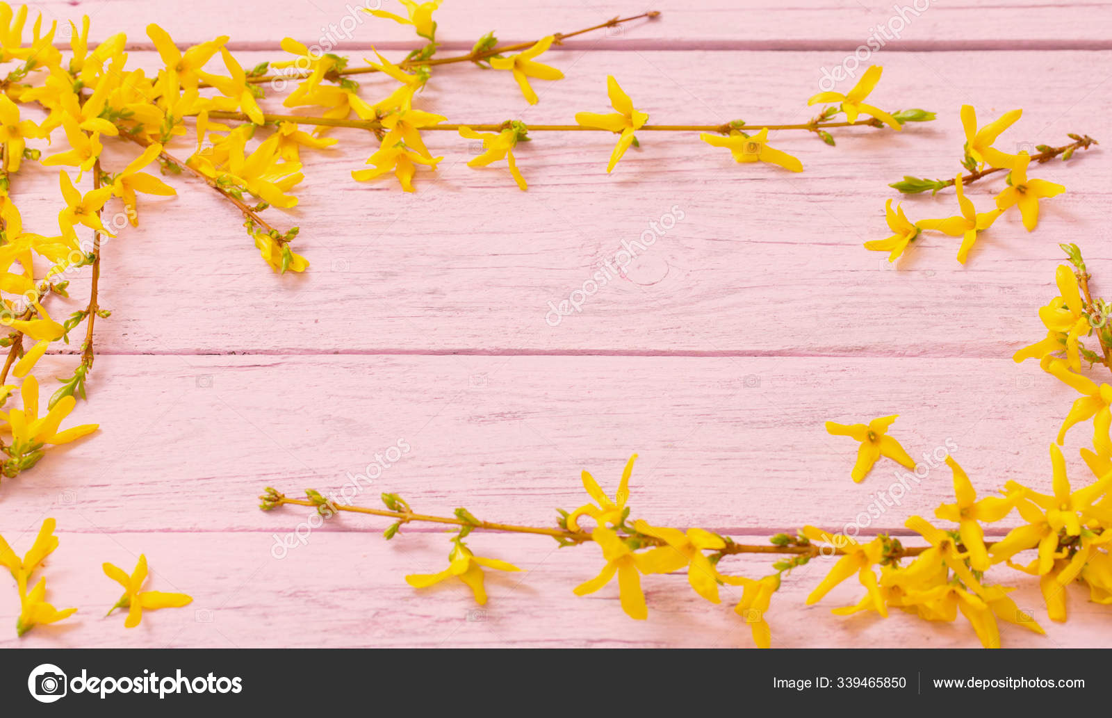 Forsythia Flowers On Pink Wooden Background Stock Photo