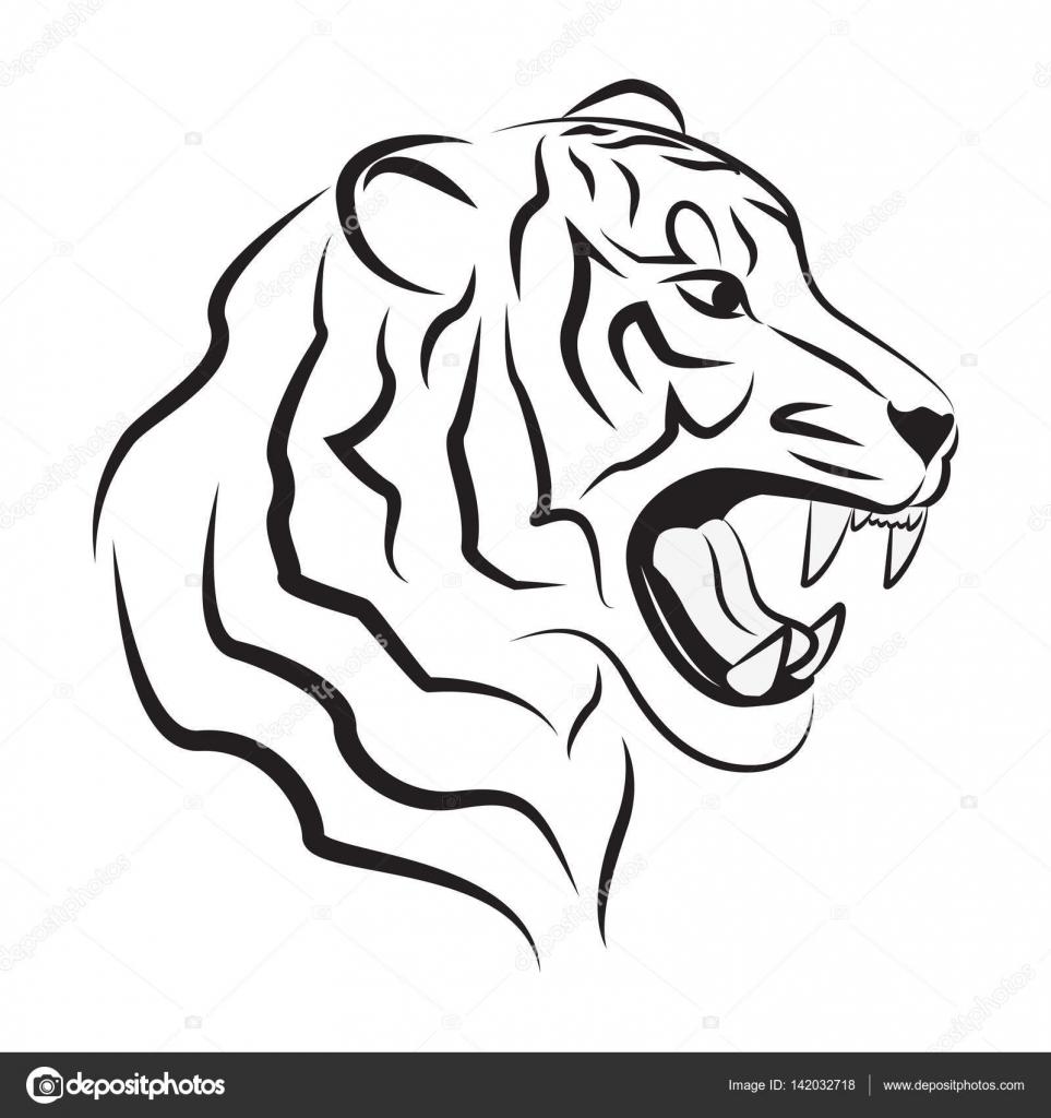 Imágenes Tigres Para Dibujar Tigre Enojado Dibujo Vector De