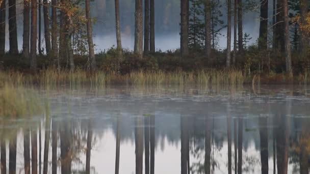 Smrkovými lesy s staré borovice a nízké plazivé mlhy, klidné jezero