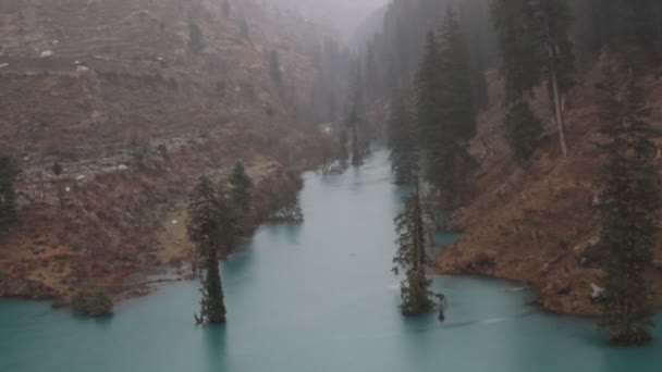 Himalayan firs and Himalayan spruce in lake. Flooded forest