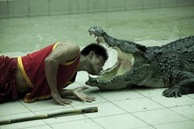 Open the jaws of a huge crocodile, trainer puts his head into the mouth of a dangerous predator. Thailand Phuket Zoo.