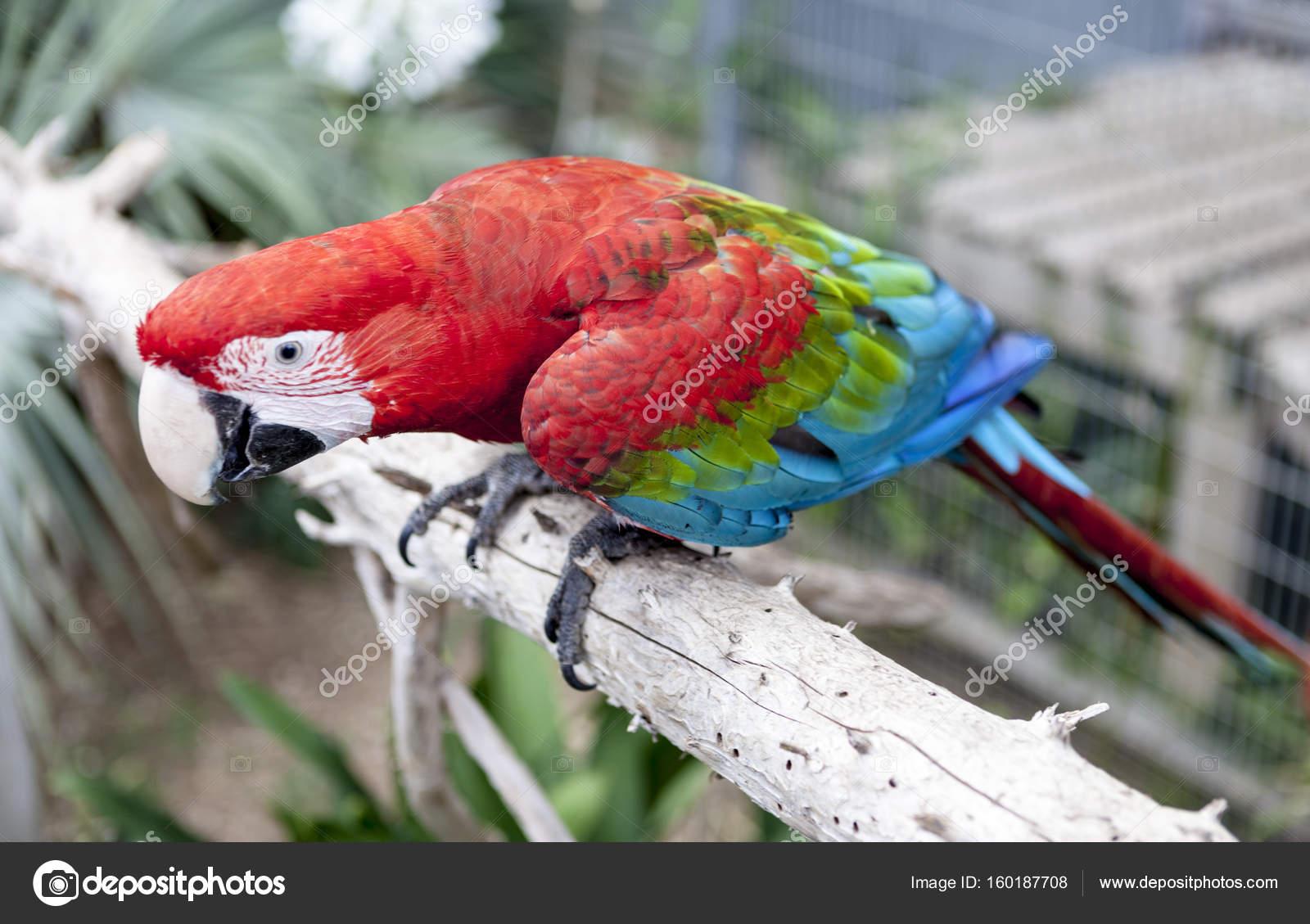 μόνο μεγάλο πουλί φωτογραφία