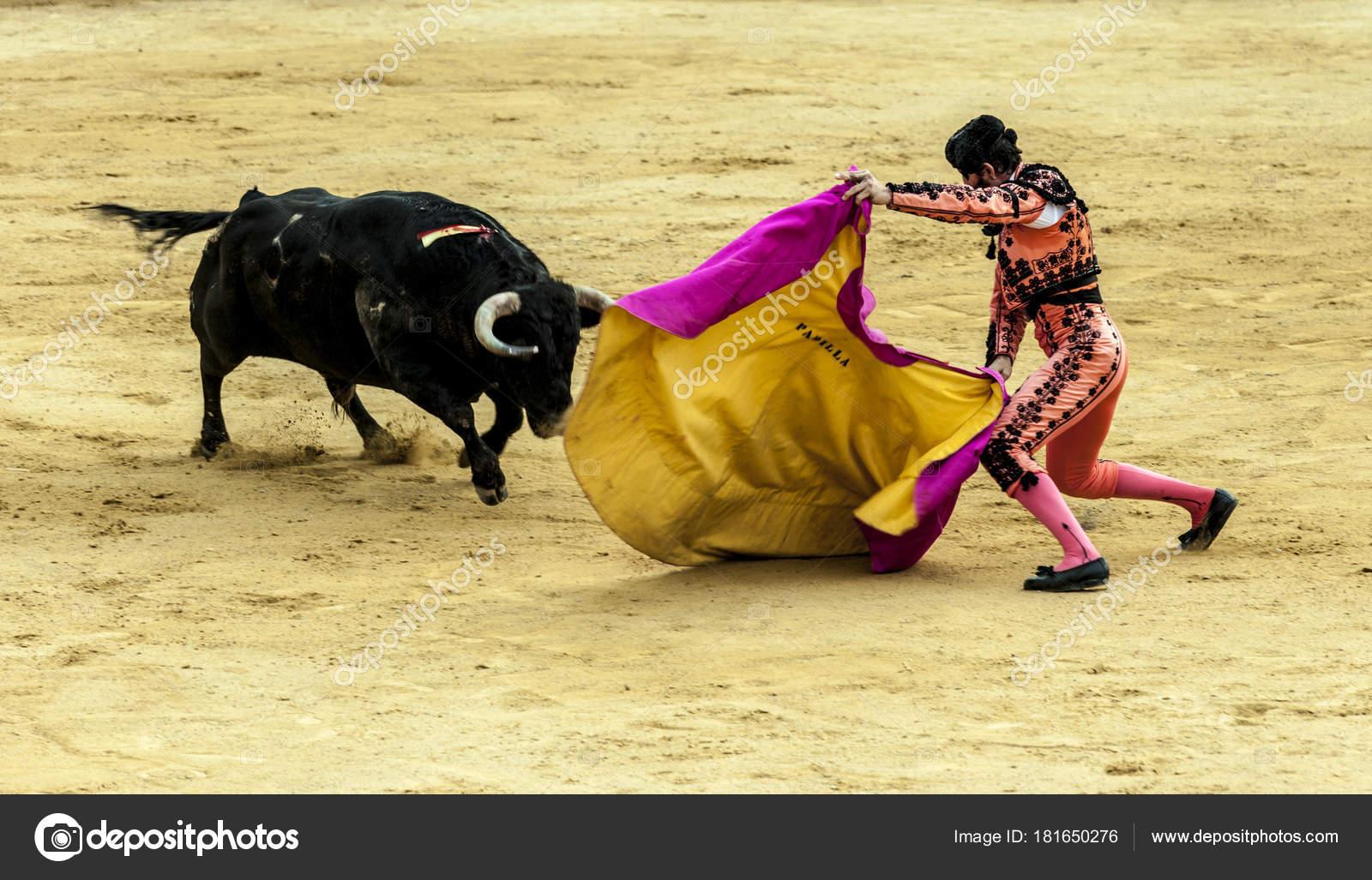 La dernière bataille du taureau. Le combat d'un taureau et