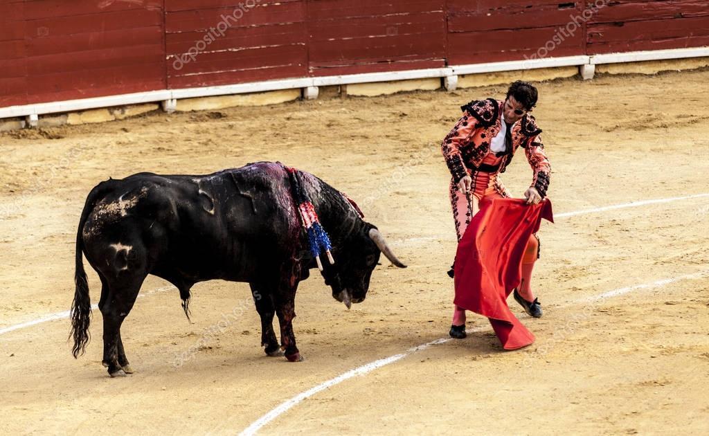 Corrida de toros. La dernière bataille du taureau. Le