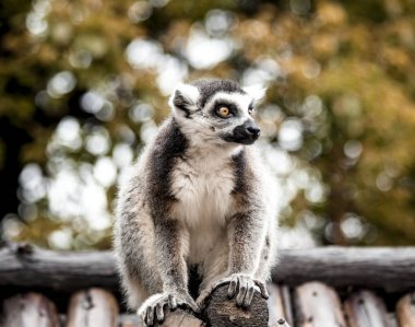 A large lemur sits on the roof of the house