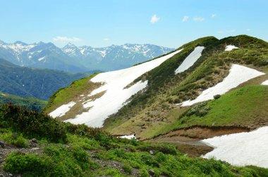 Alpine meadow with flowers