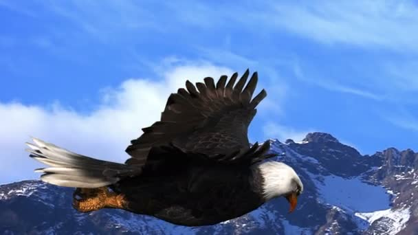 Bald Eagle Flies Against the Background of Mountains and Sky Animation