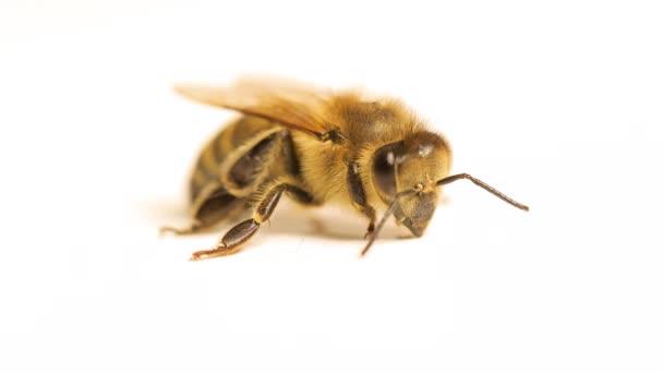 Utrpení včel a jejich slabost