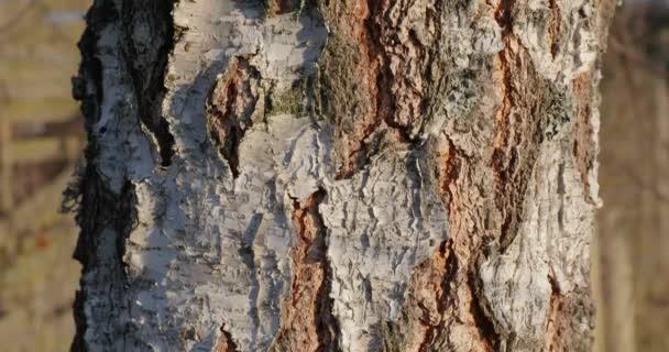 Kmen stromu v lese