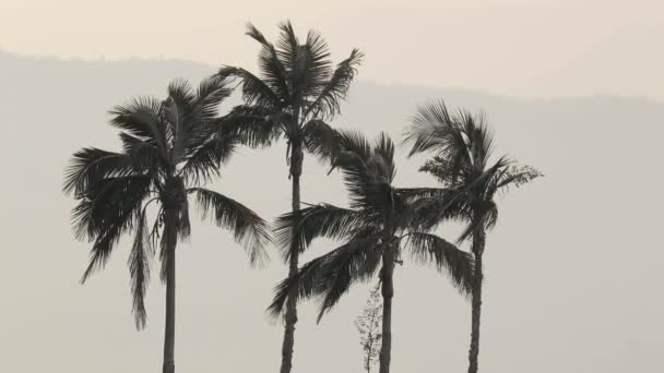 Tall palm trees in breeze