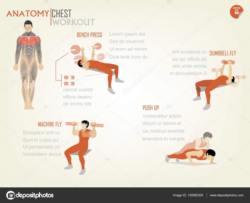 hermoso diseño infográfico de entrenamiento de pecho consisten en ...