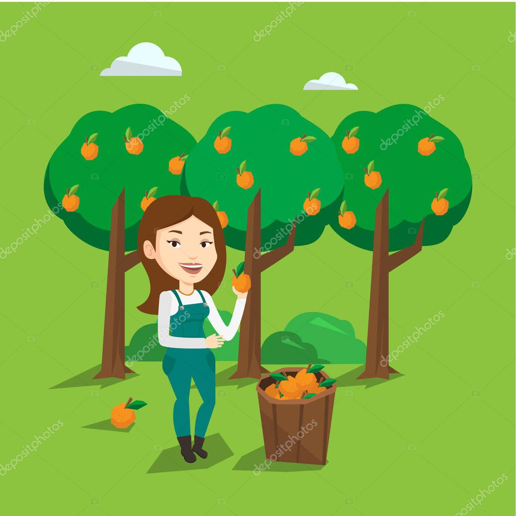 Farmer collecting oranges vector illustration.