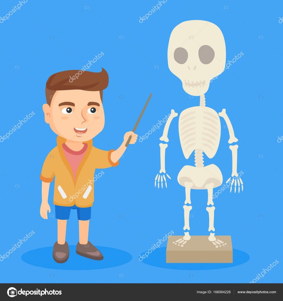 Kaukasische Schüler studieren das menschliche Skelett — Stockvektor ...