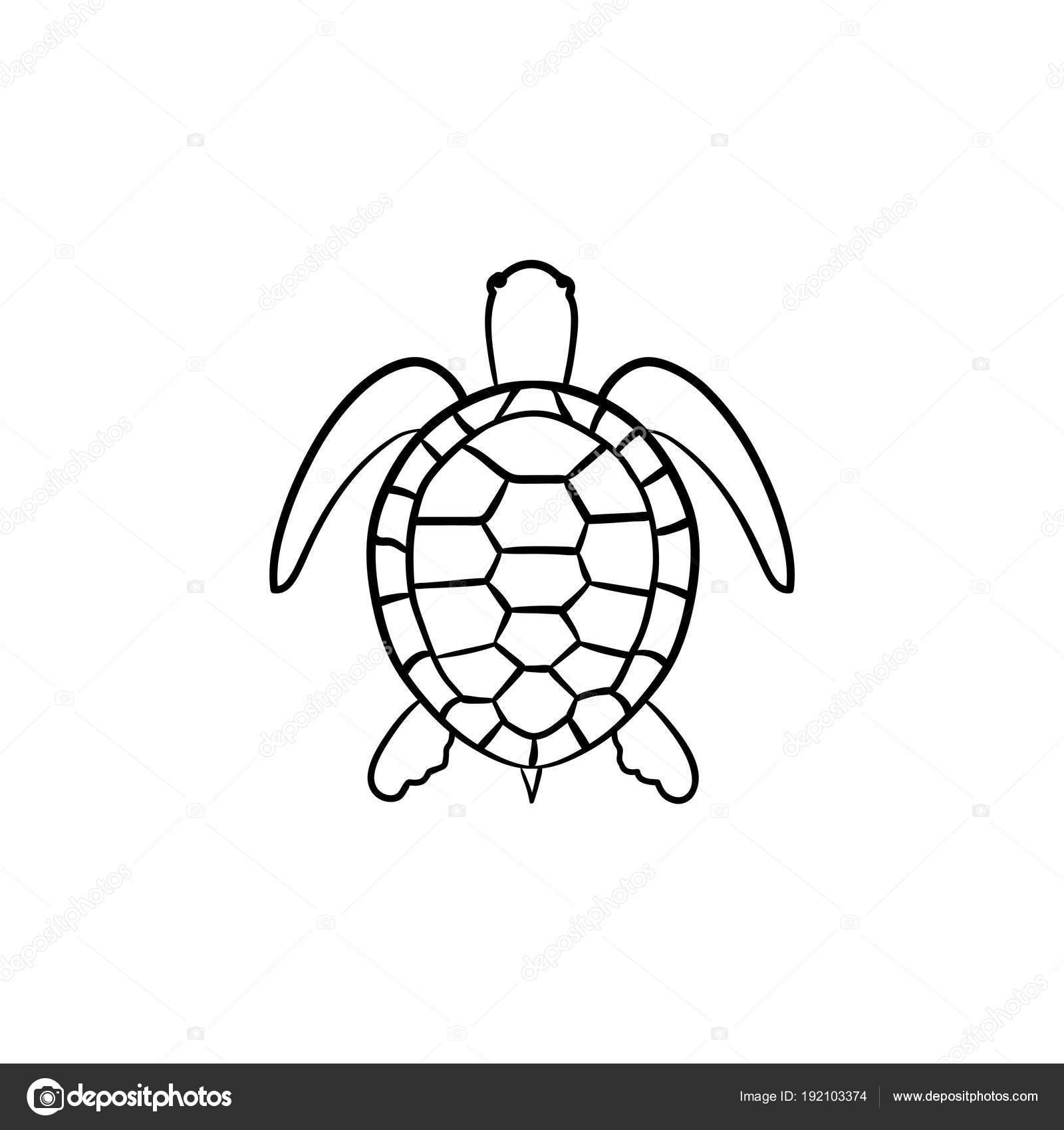 tortuga de icono de esbozo dibujado a mano — vector de