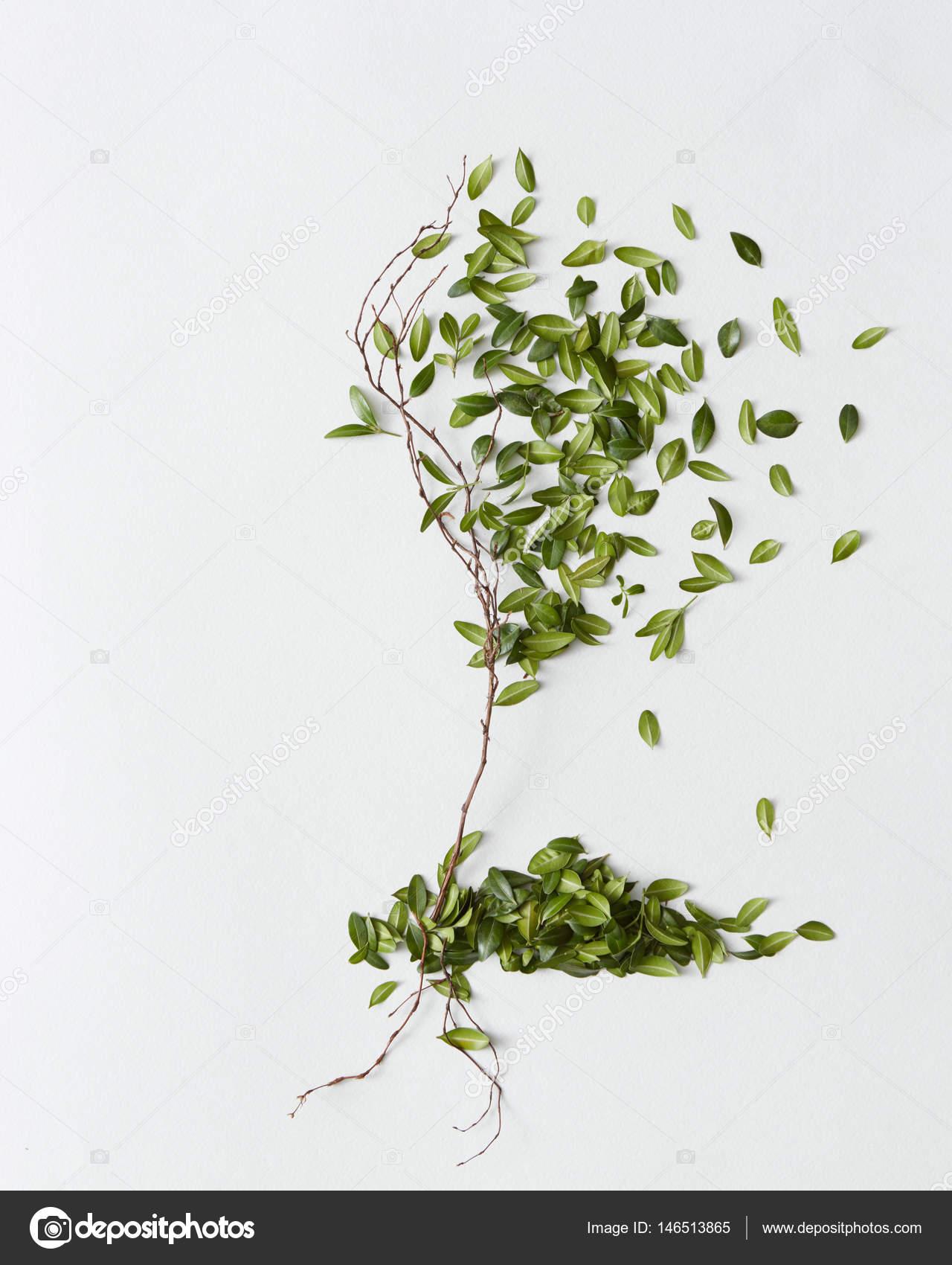 arbre décoratif fait de branche avec des feuilles — photographie