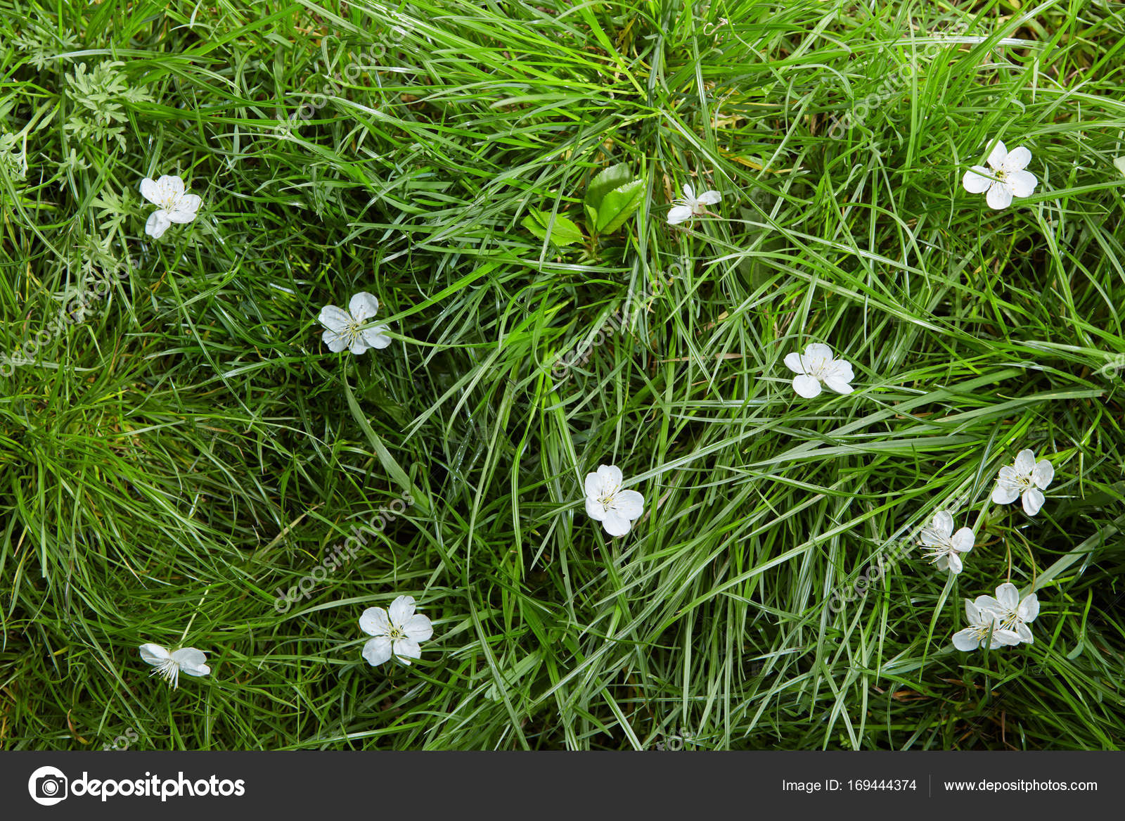 Small flowers in grass stock photo artjazz 169444374 white small flowers growing in fresh green grass in the meadow photo by artjazz mightylinksfo