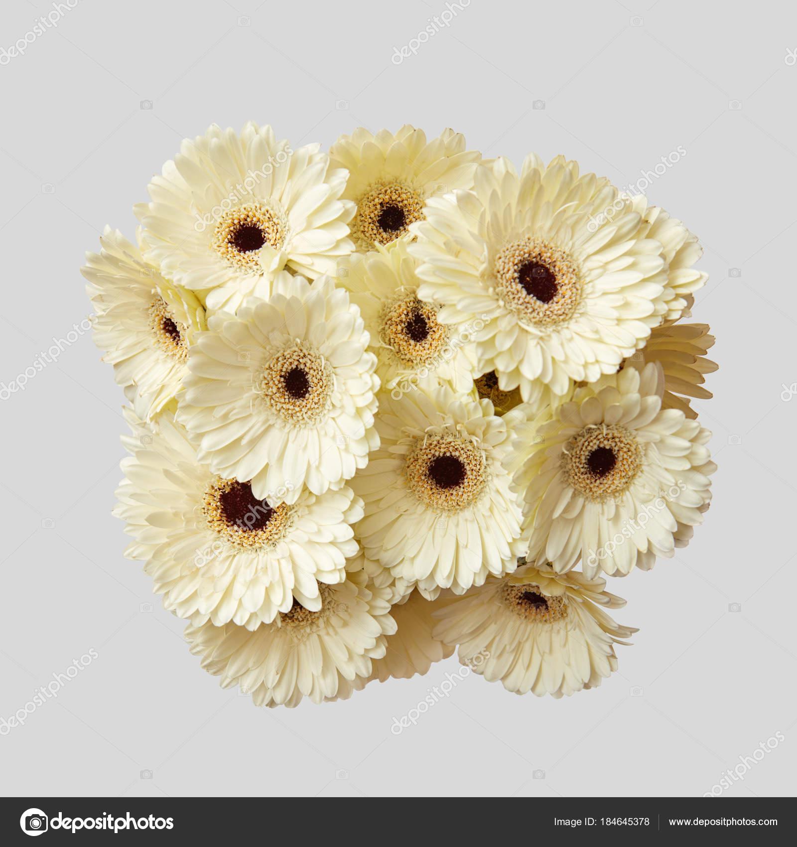 Bouquet White Fresh Gerbera Flowers Grey Background Valentine Day