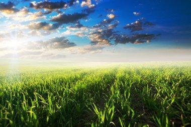 Beautiful green  Field in summer.
