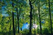Fotografia bella foresta verde