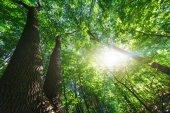 lesní stromy. přírodní pozadí