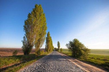 stony road through the field