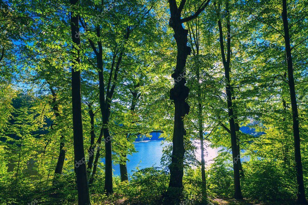 Фотообои beautiful green forest