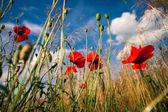zöld és piros pipacs szép virágok