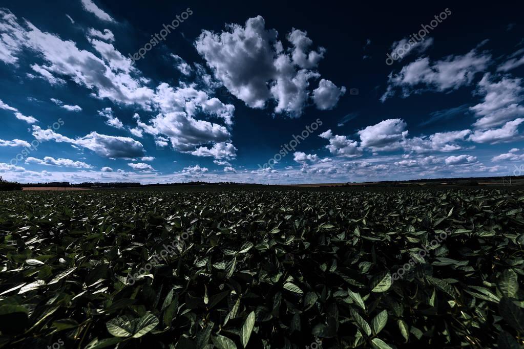green night field. sky