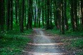 Fotografie krásné zelené lesní přírodní krajina