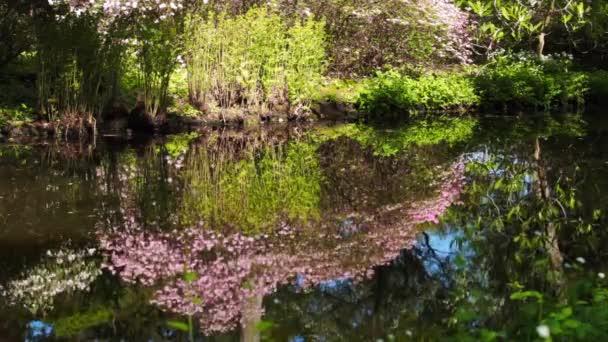 Jarní krajina s rybníkem a květinami Rododendron.