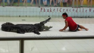 THAILAND, PHUKET - MARCH 07: Traditional for Thailand Show of crocodiles. Trainer puts his head in a crocodiles mouth on March 07, 2017 in Phuket Crocodile World Chalong, Thailand