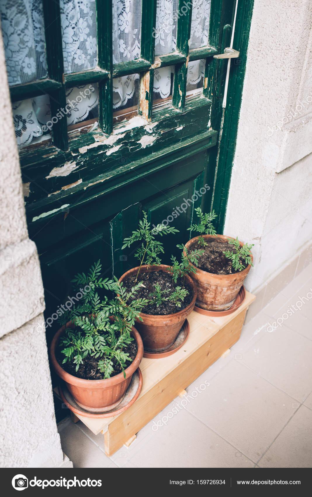 Home Plants And Herbs In Pots On Old House Veranda, Vintage Door U2014 Stock  Photo