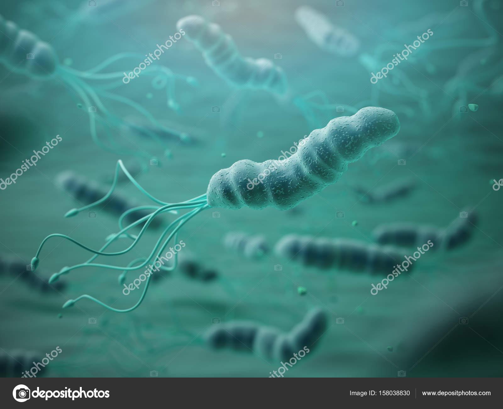 Helicobacter pylori - Wikipedia