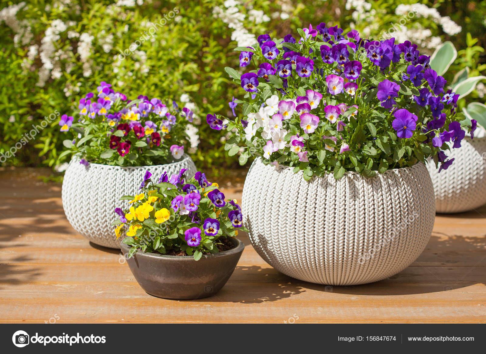 Beautiful pansy summer flowers in flowerpots in garden stock photo beautiful pansy summer flowers in flowerpots in garden photo by duskbabe izmirmasajfo