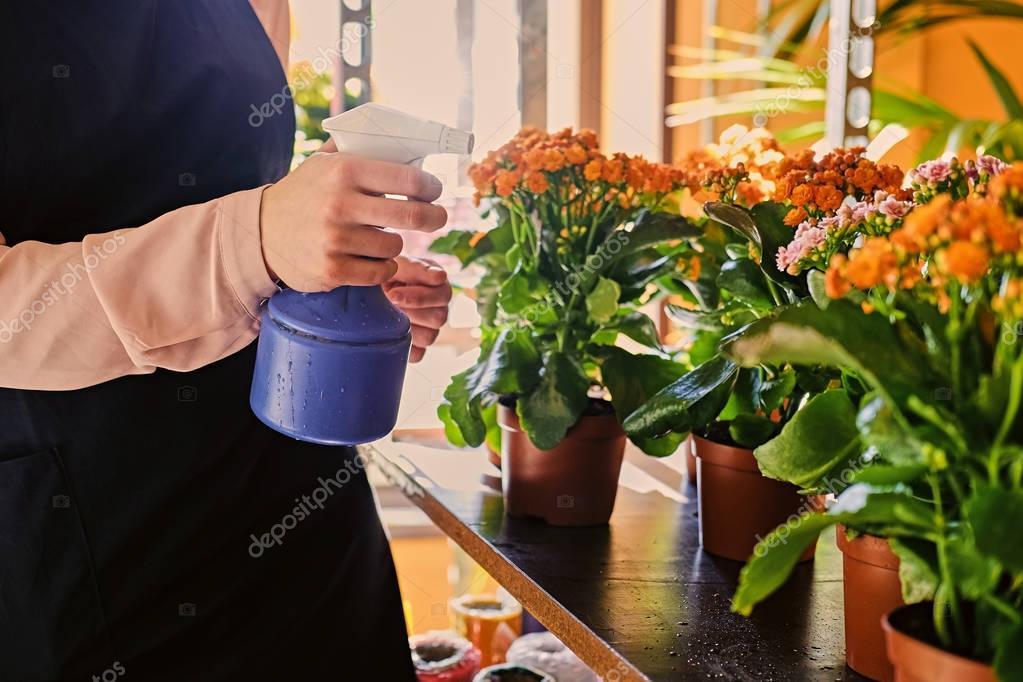 Чем поливают цветы в магазинах, букет тюльпанов екатеринбурге