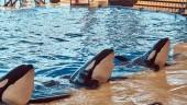 Fotografie Killerwale, während eine Delphin-Show in den national zoo
