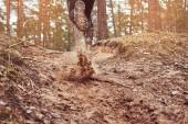 Fotografia Sportivi che corrono lungo il sentiero nel bosco. Un attivo stile di vita, vista posteriore