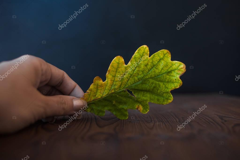 Oak leaf. To hold a hand, on wooden background