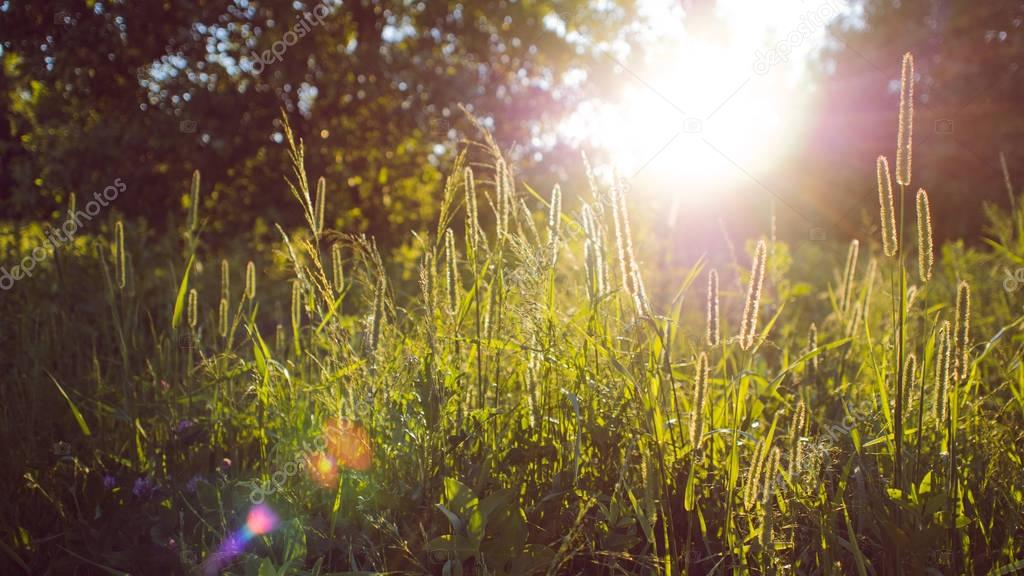 Grass and sun light, abstract natural background