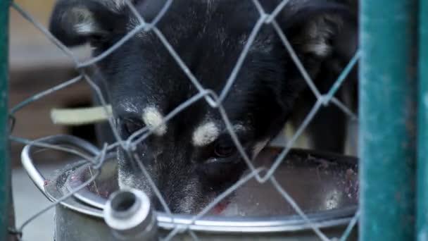 Hund im Käfig im Tierheim